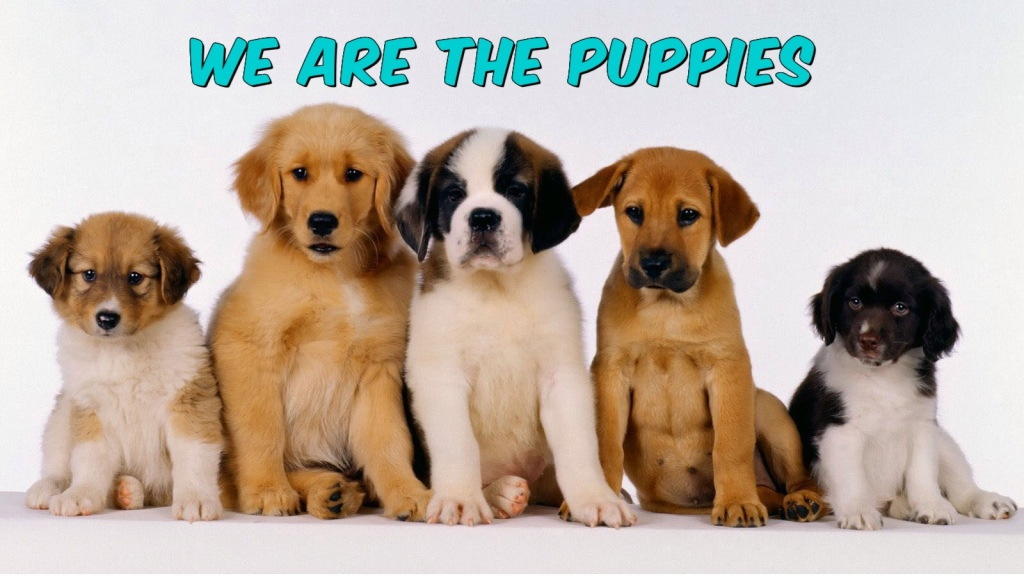 We Are The Puppies