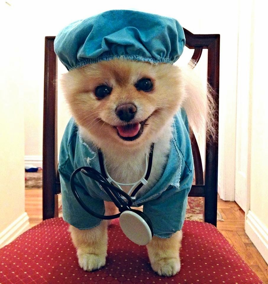 Dr. Harp Seal; Somewhere in the middle lies Gratitude