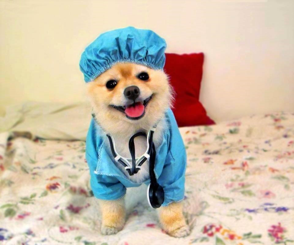 Dr Harp Seal red pillow